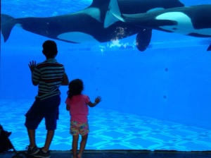 Shamu and baby! (And Alex and some little punk who wouldn't leave her side the entire time and kept trying to nudge HER away as if SHE was the problem. Ugh!)